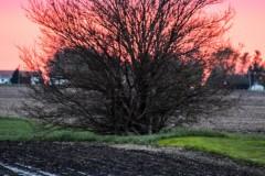 Spring Sunset V