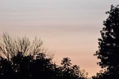 Tree Sihouette II