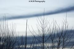 Winter Clouds III