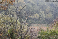 Woodford County Preserve