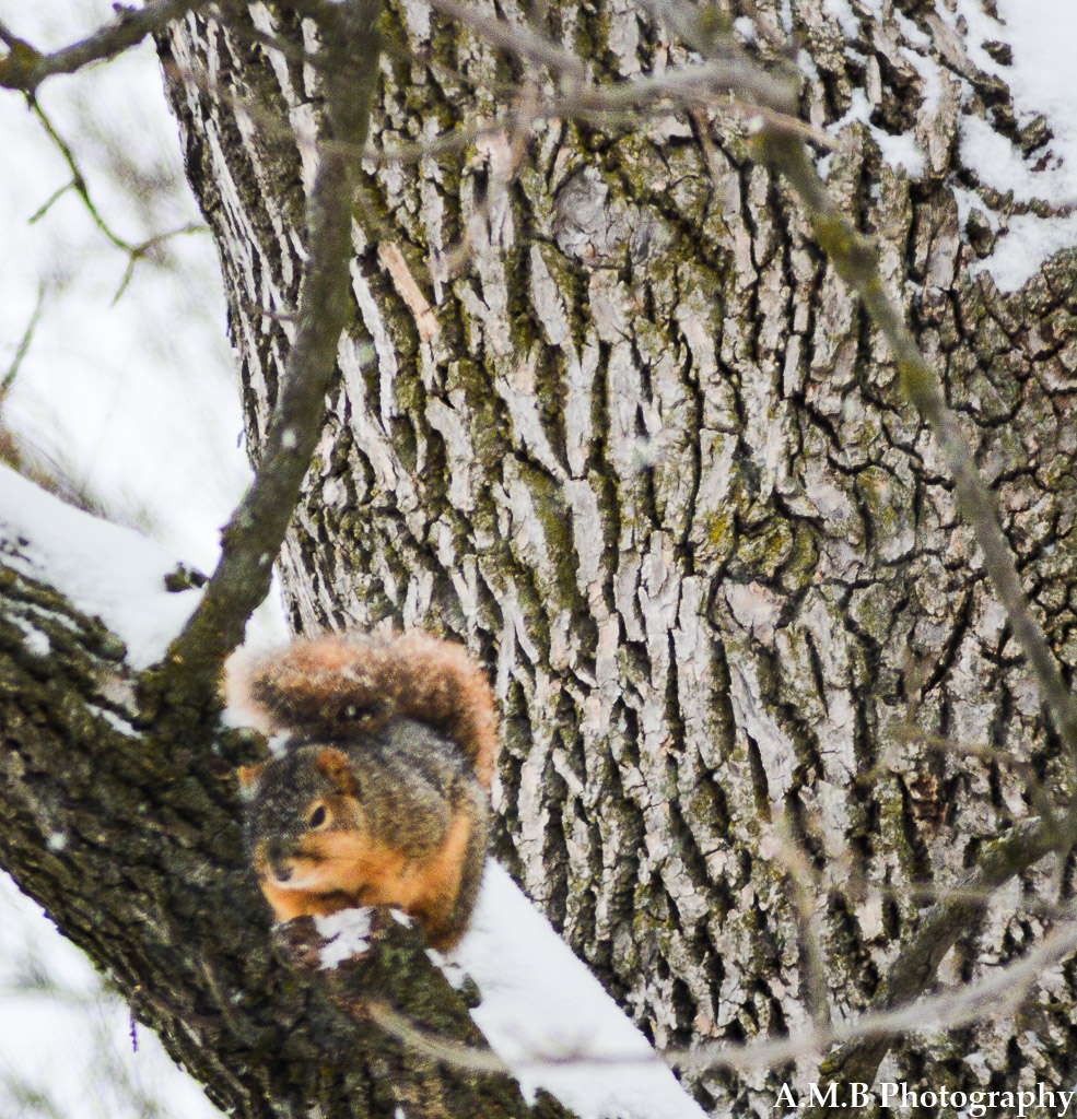 Our little friend came to visit us on Christmas Eve 2017. It seemed as if he was enjoying the snow falling as much as we were that morning, but trying to stay warm while doing so.