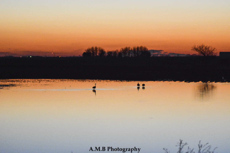 Evening Geese II