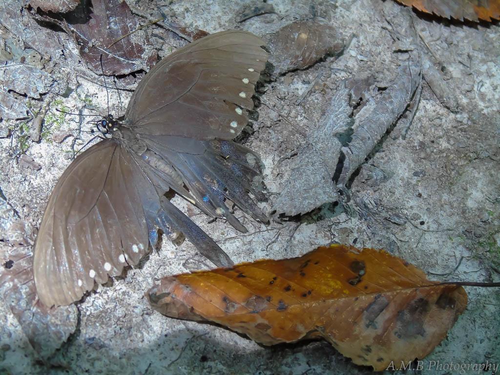 Old Moth