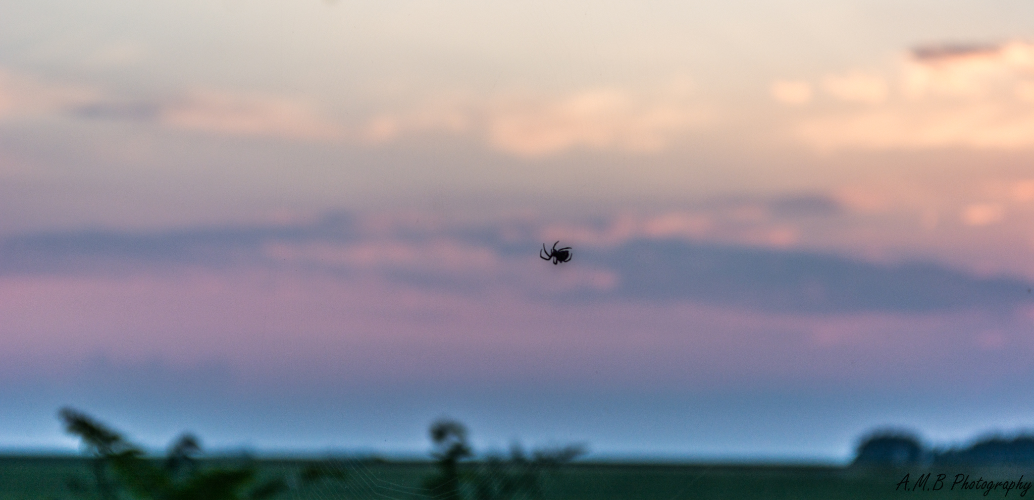 Orb-Weaver Spider VI