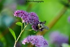 Bumble & Blooms