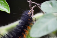 Climbing Caterpillar