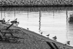 Seagulls in Mackinac City, Michigan II