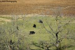 Wisconsin Dairy Land II